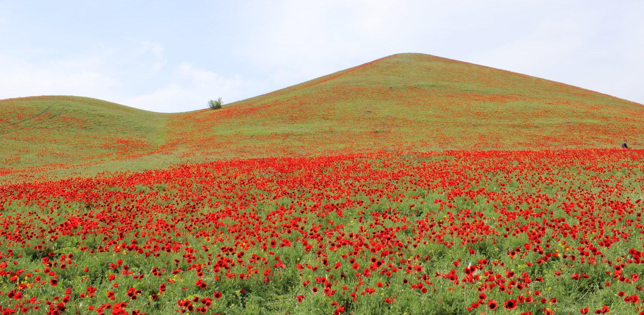 Mayıs'a ağlıyor aylardan Teşrinisani, Şiir: Soso KAKUBAVA